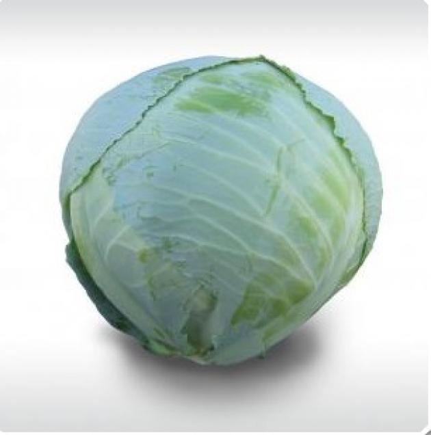 Сорта среднеспелой капусты белокочанной от Китано